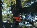 Residential tree cutting service in Oregon