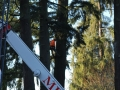 Portland residential tree cutting service using crane truck equipment