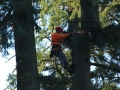 Portland residential location tree cutting service