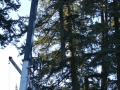 Douglass Fir tree removal crane equipment in Portland Oregon
