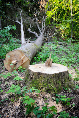 How To Kill The Roots Stump Of A Tree Without Digging It Up