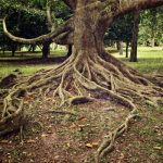Managing Aggressive Tree Roots