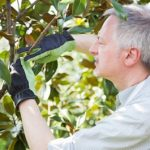 4 Signs You Should Be Trimming Your Tree