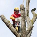 What's The Difference Between A Landscaper and an Arborist?