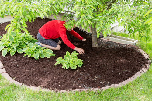 How to Care for Your Trees All Year Long