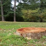 Finding the Right Stump Removal Solution