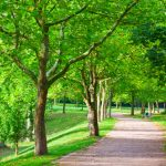 How to Prevent Trees from Damaging the Sidewalk