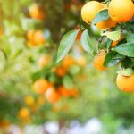 How to Train Your Fruit Tree Orchard
