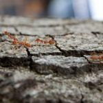 What to Do if Your Tree is Invested With Ants (1)