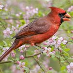 The Trees to Plant to Attract Cardinals