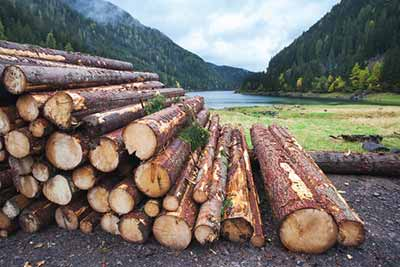 What is Commercial Logging?