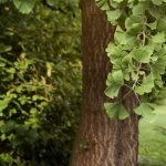 Our Favorite Drought-Tolerant Trees to Plant in Your Front Yard