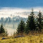 How to Tell the Difference Between Spruce, Fir and Pine Trees