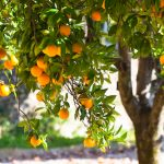 Tips to Care for Fruit-Bearing Trees