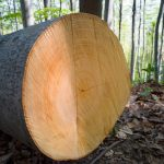 Do Tree Rings Really Indicate Age