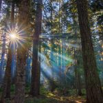 5 Unexpected Pacific Northwest Tree Facts
