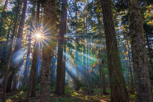 Did You Know 5 Unexpected Pacific Northwest Tree Facts Mr Tree