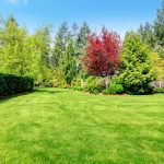 Fast Growing Trees to Enhance Your Privacy