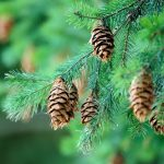 Tips to Identifying a Tree By its Leaves