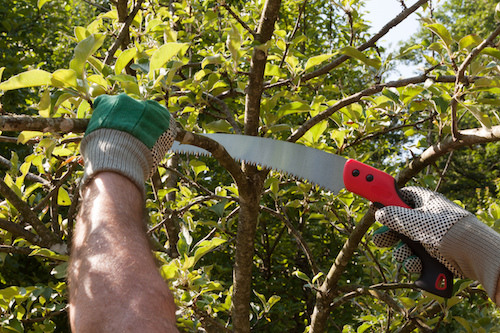 Tree Pruning: What Not To Do