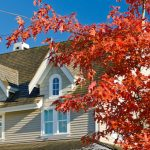 What You Should Know About Properly Caring For a Maple Tree
