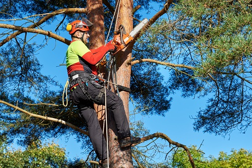 How to Cut Large Branches Off a Tree