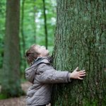 Dont-Forget-to-Think-About-Width-When-Choosing-a-Tree