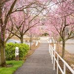 How to Properly Care for Flowering Trees in Winter