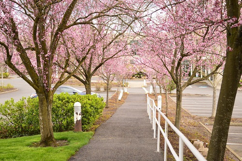 How To Properly Care For Flowering Trees In Winter Mr Tree Inc
