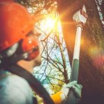 Types of Services Available for Tree Care Vancouver WA