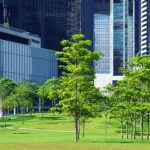 4 Reasons to Hire Commercial Tree Service for Your Business Property