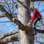 Looking for an Arborist in Beaverton - We Can Help