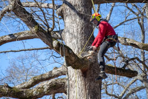 Looking for an Arborist in Beaverton? We Can Help