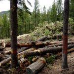 What to Expect with Commercial Tree Service in Vancouver, WA