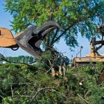 5 Questions to Ask When Hiring a Commercial Tree Removal Service