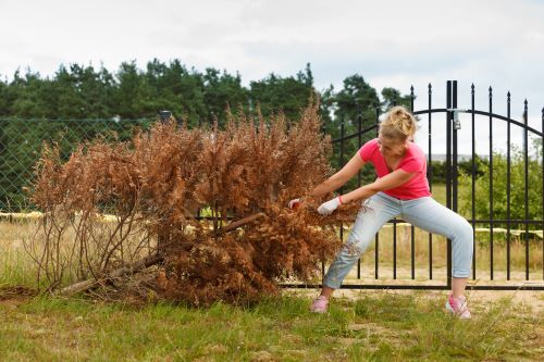 5 Tips For Diy Small Tree Removal Mr