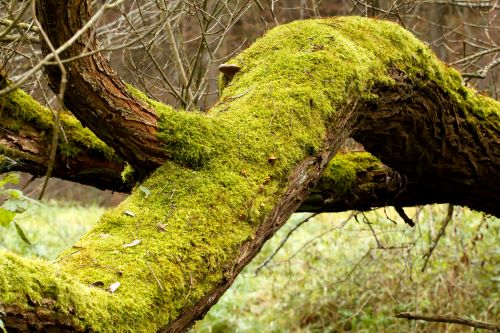 Four Essential Questions About Moss Growing On Your Trees Mr