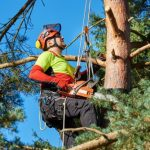 How to Climb a Tree to Cut Branches