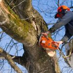 Will Branches Grow Back After Tree Branch Removal