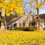 6 Questions to Ask Your Portland Arborist Before Fall