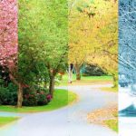 Benefits of Professional All-Year Tree Service
