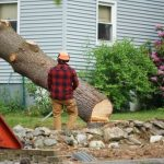 Hiring a Company for Tree Removal Vancouver WA
