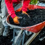 How to Prepare for Landscaping After Tree Removal