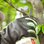 What to Expect from Affordable Tree Service