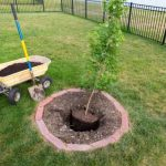 5 Tips for Planting After Tree Removal
