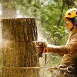 Top 7 Reasons for Tree Removal