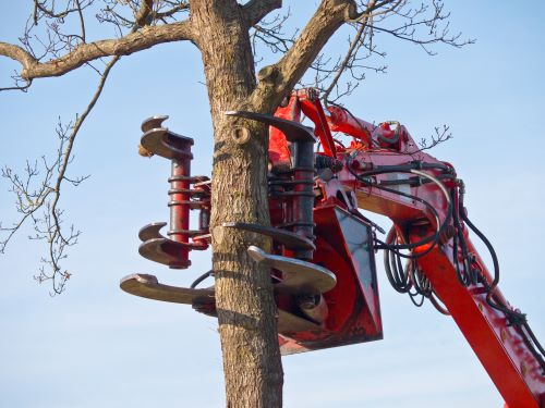 What Kind of Tree Service Uses a Crane?