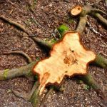 5 Methods for Tree Stump Removal