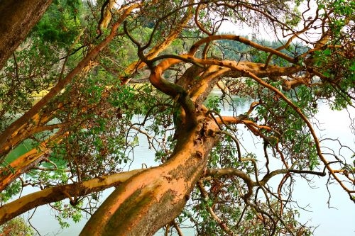 5 Native Pacific Northwest Trees for Your Yard
