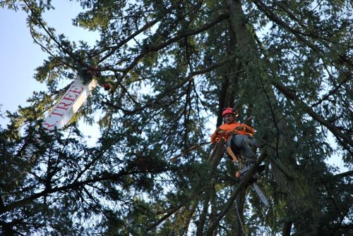5 Top Tree Service Jobs in Oregon